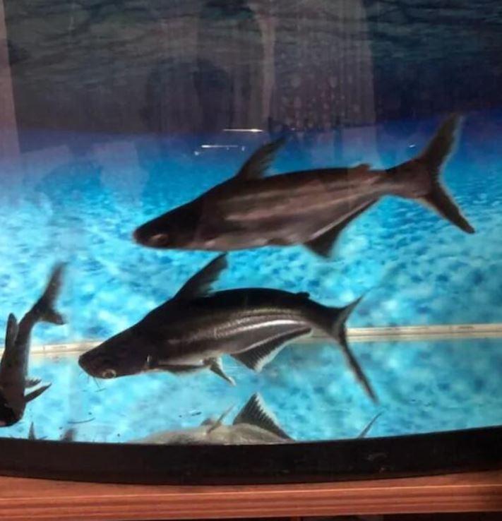 2 Adet 30CM 20CM Köpekbalığı